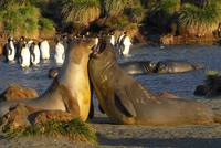Pinnipeds and Penguins enjoy the sunshine and the flat water.