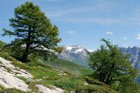 View on the Wildhorn Massif in the Swiss Alps