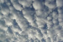 Altocumulus forming a dense layer