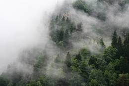 Fog at the hillside in the Steiermark, Austria