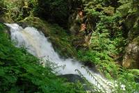 A small detail of the well-known Triberg Waterfalls