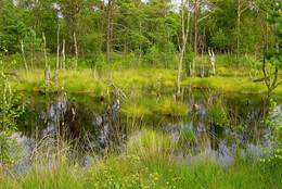 The Pietzmoor is the largest continuous marsh in the Lüneburg Heath