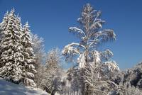 Winter Scene in the Thuringian Forest