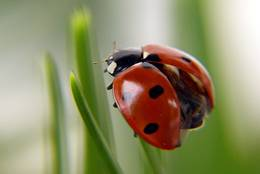 Ladybird before takeoff
