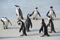and they look active these penguins