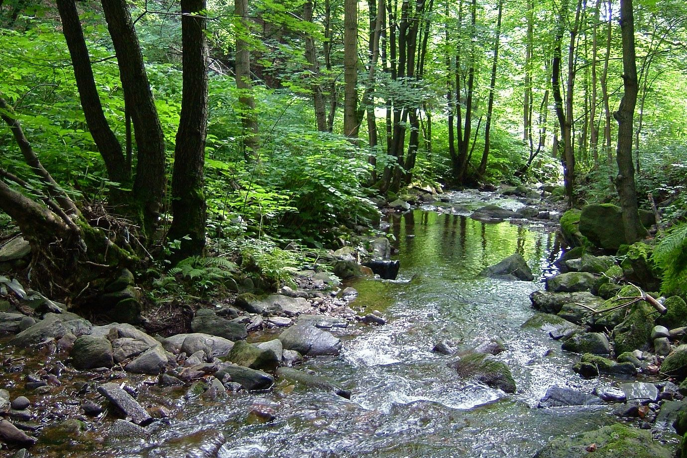 Creek in a forest in Thüringen