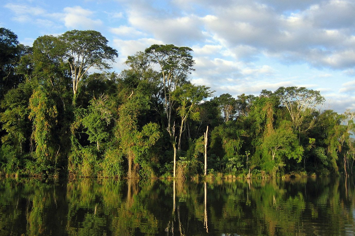 Forest in Paraguay