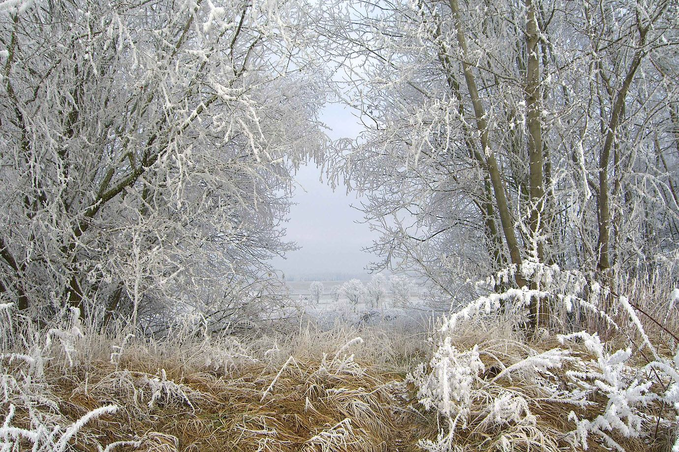 White frost changes the landscape