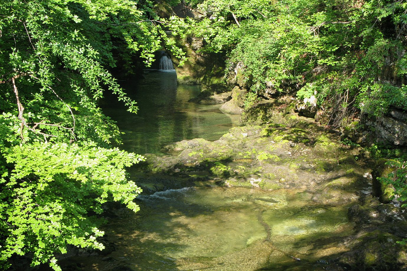 Clear water and trees decorate the Vintgar Gorge
