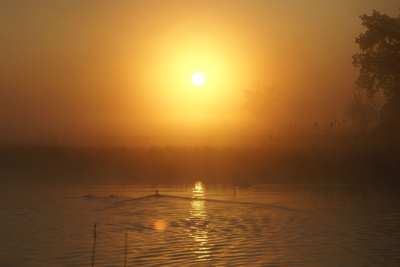 Golden sunrise at the Peene