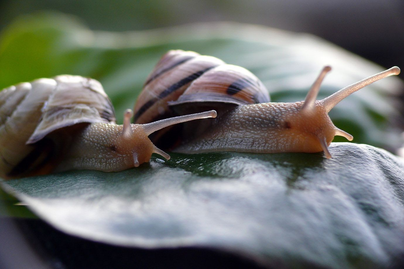 2 Gastropods on the way